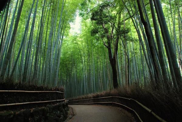 La vegetazione in Giappone
